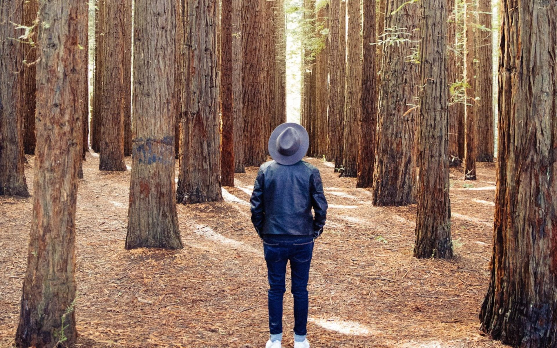 A Majesty of Redwoods: Visiting the Montgomery Woods State Reserve