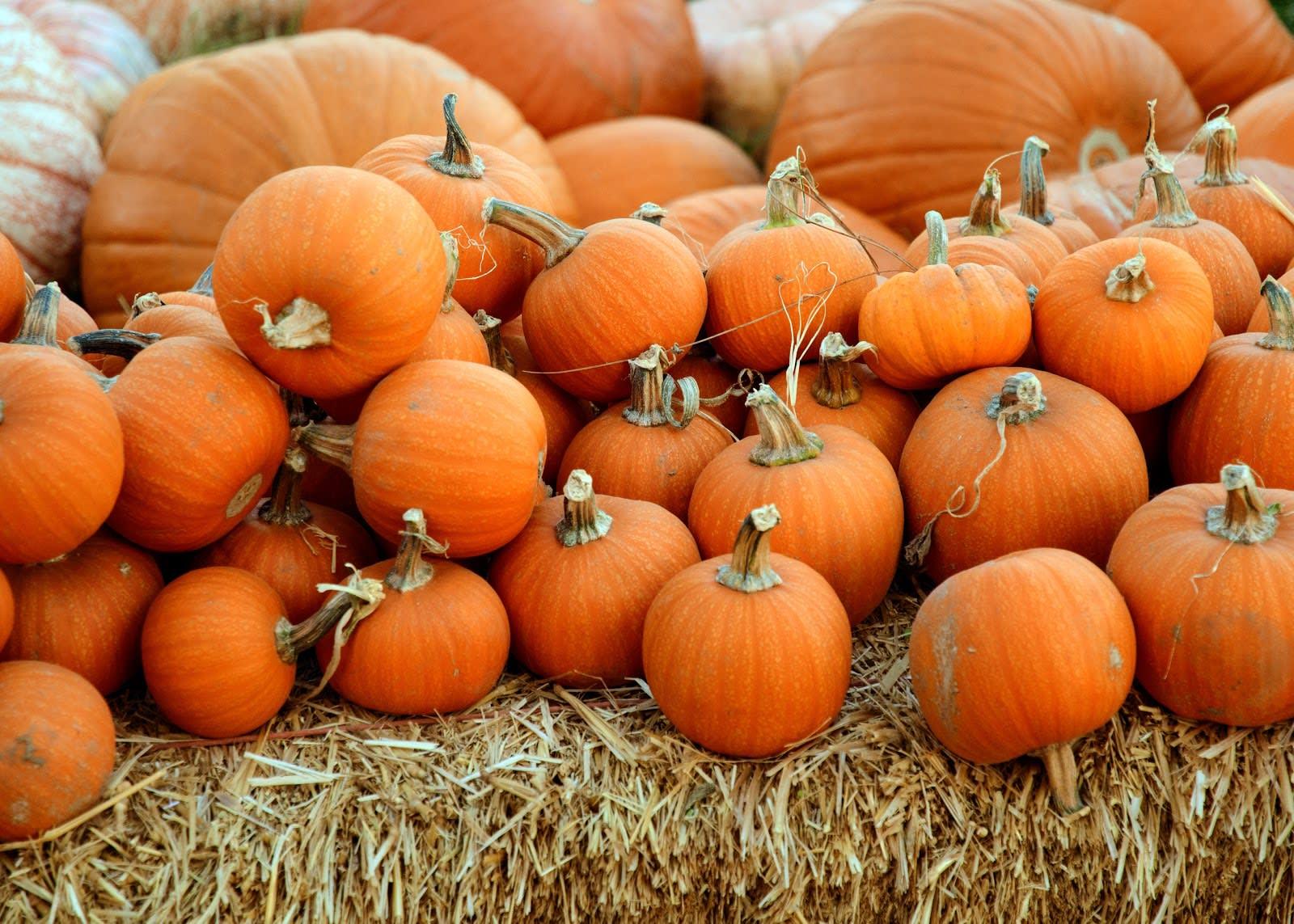 Celebrate the Fall Season at Ukiah's PumpkinFest