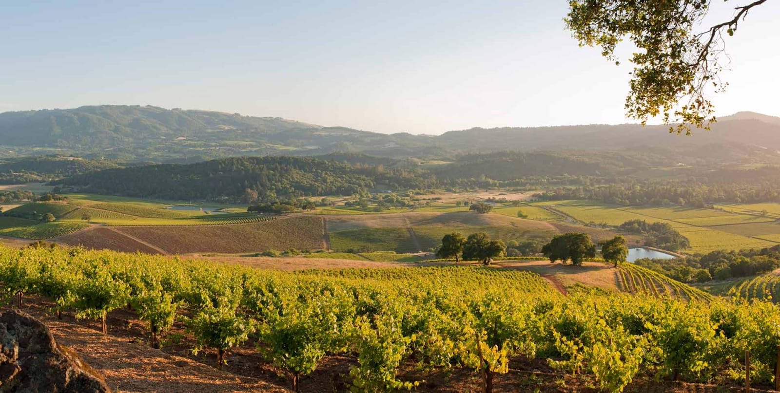 The Ins and Outs of Wine Country Real Estate