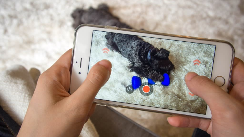 The Best in Modern Technology for Pets