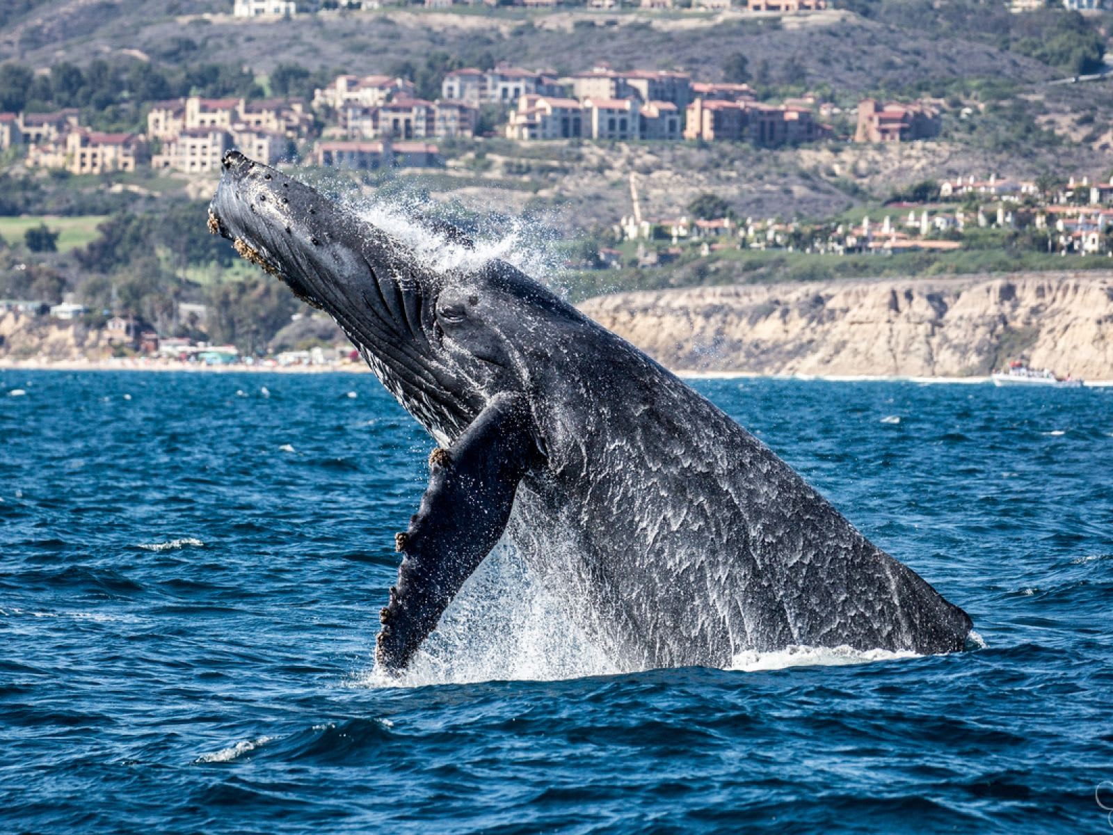4 Best Whale Watching Excursions Near Corona del Mar