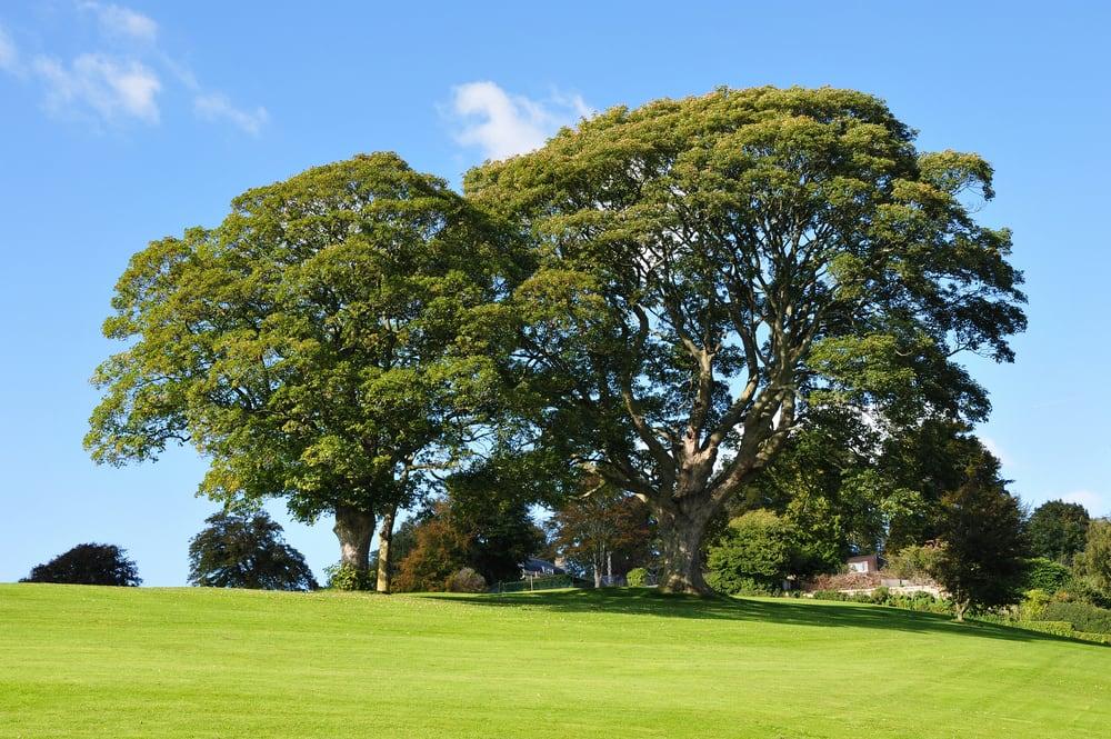 Majestic, Mature Trees Attract Luxury Homebuyers