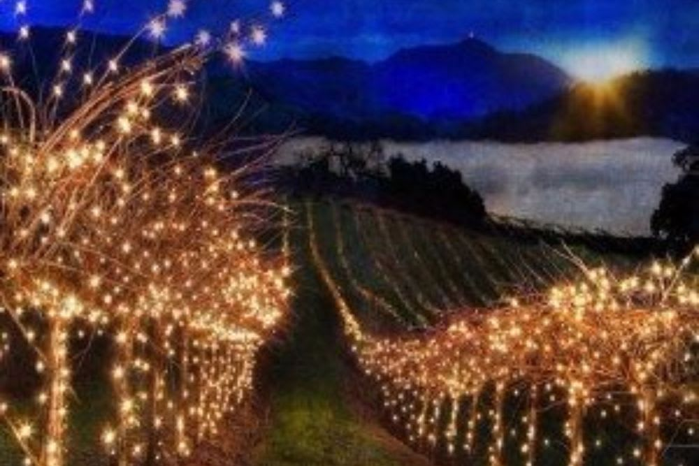 Holiday Happenings in Sonoma County