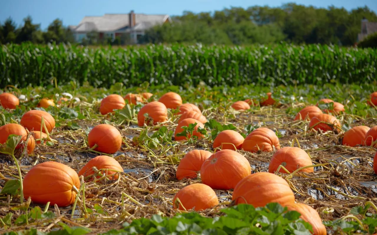 12 Festive Fall Events in the Hamptons