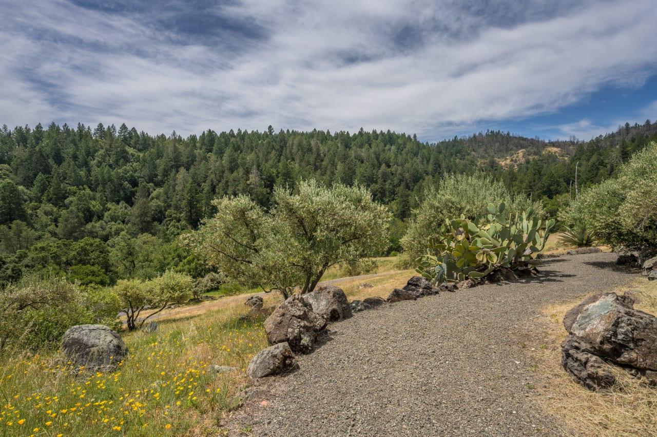Napa Valley Vineyard View