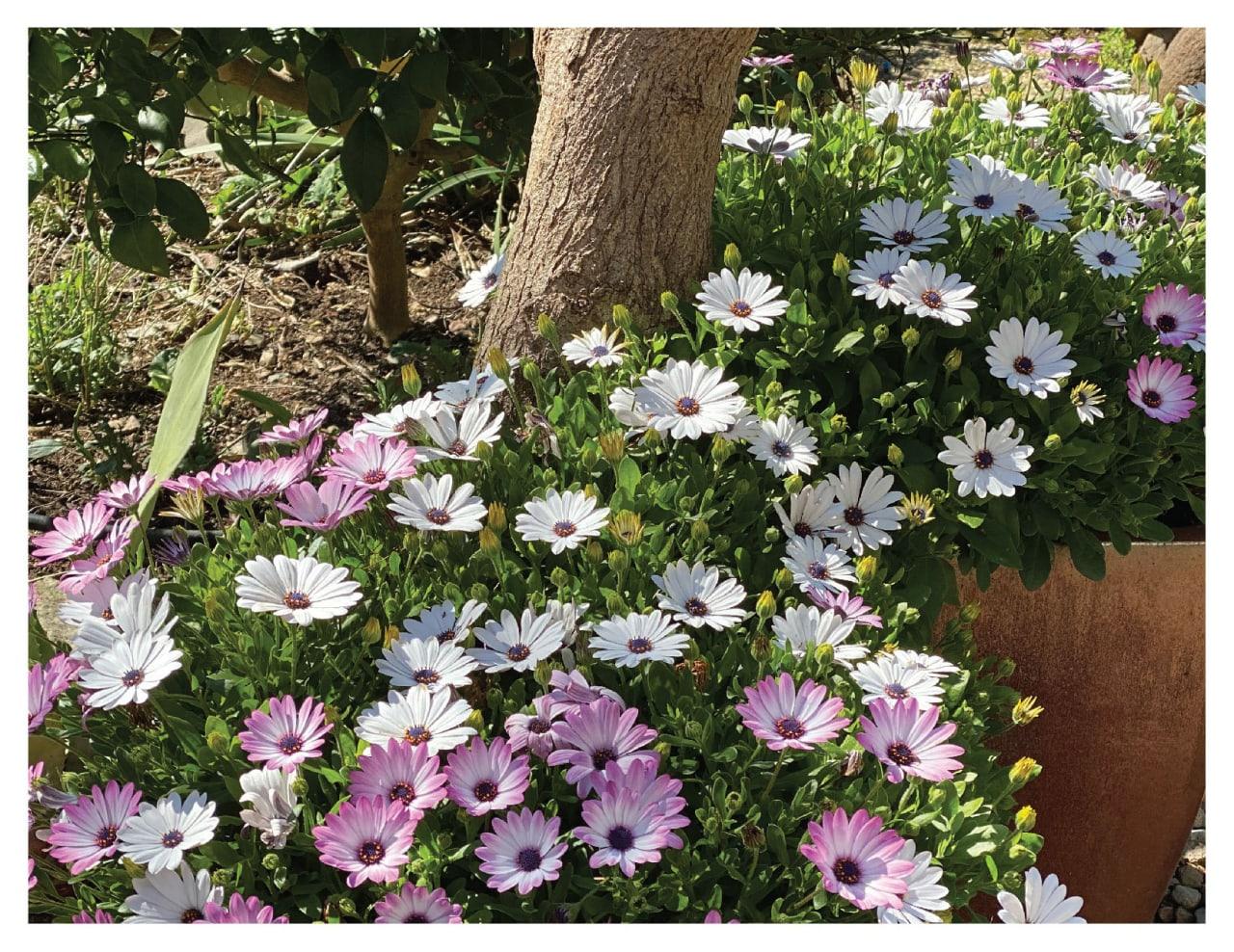 Creekside Oaks in Bloom