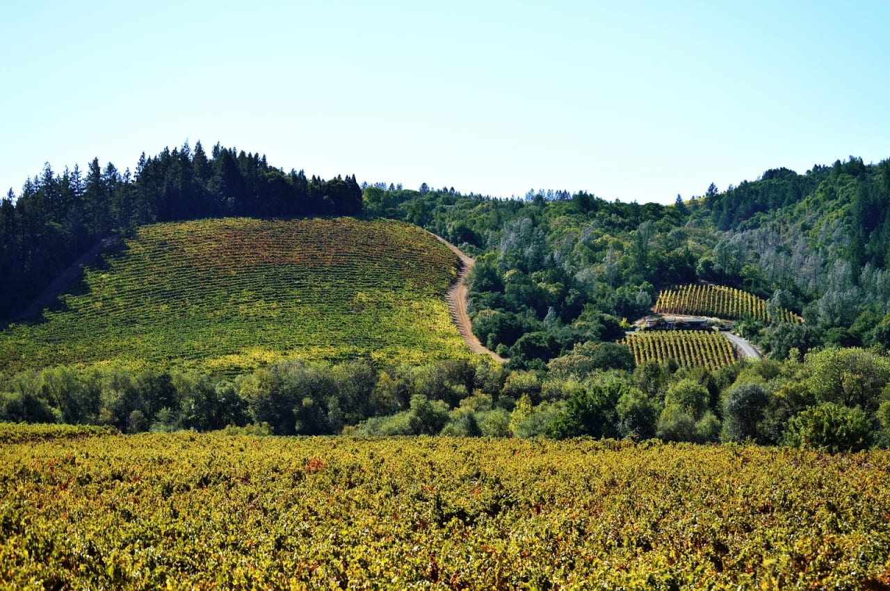 From Glen Ellen to Kenwood: Which Sonoma Valley Neighborhood is Right for You?