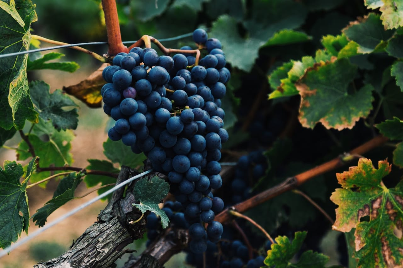 What to Do in Napa Valley: Harvest Time to Cabernet Season