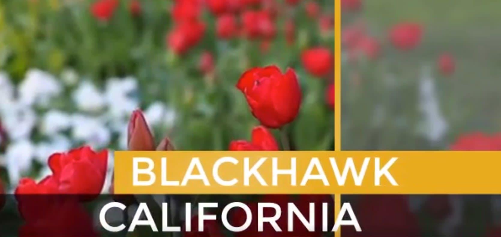 Blackhawk video preview