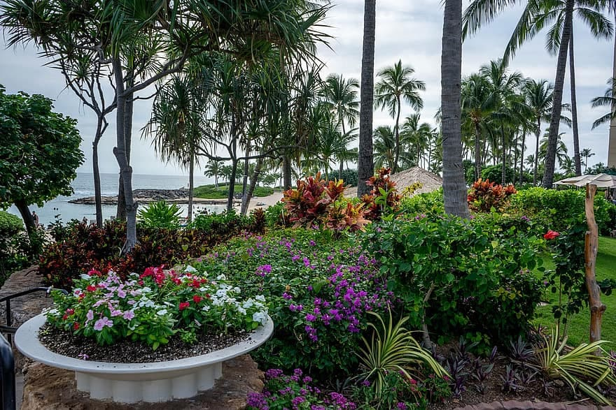 4 Hawaii Gardening Tips