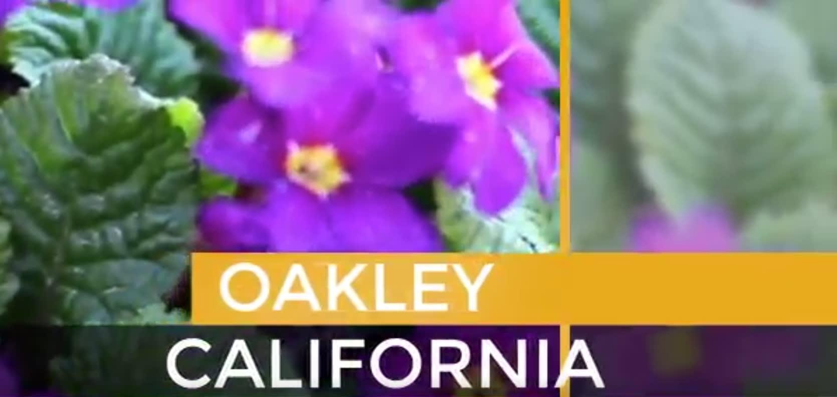 Oakley video preview