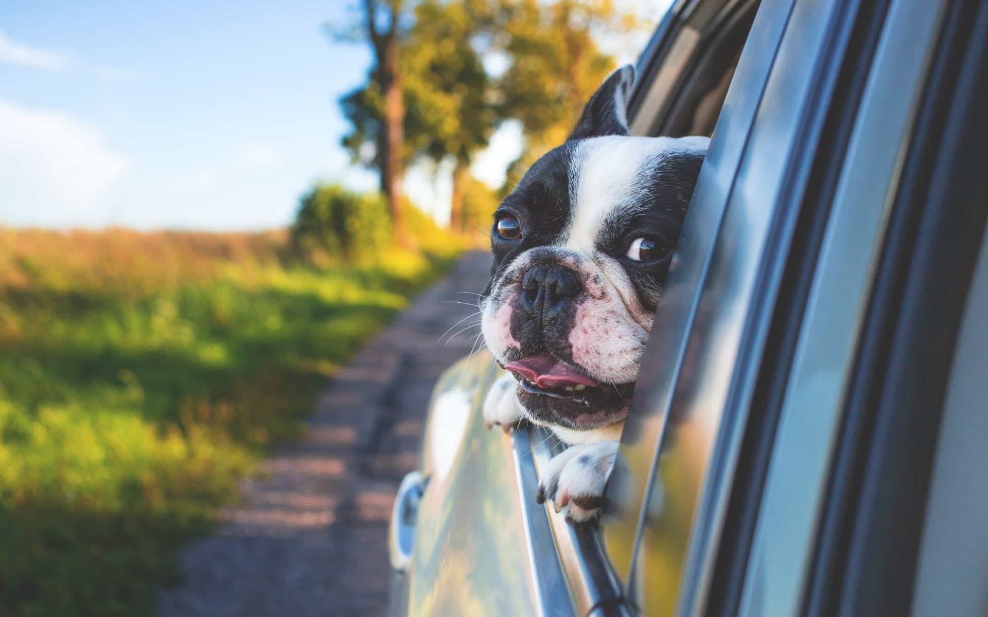 7 Essentials That Can Make Moving Less Stressful for Pets & Pet Parents