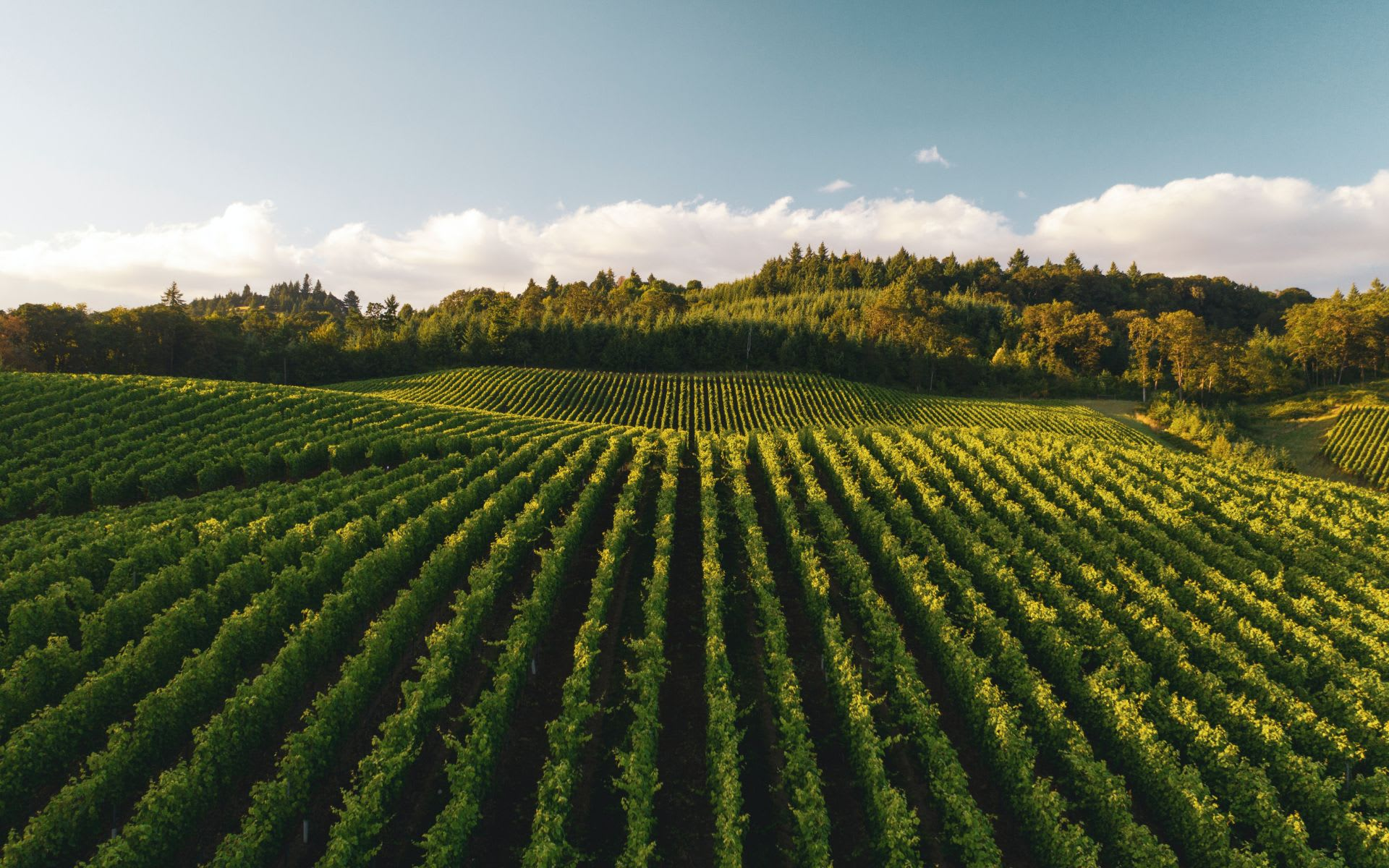 It's the Perfect Time to Enjoy Wine Country