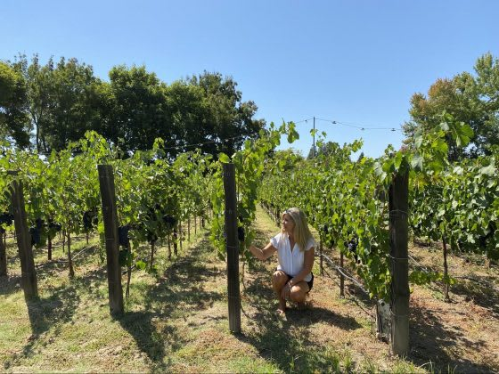 Welcome Home | An Agent's Vineyard Getaway in Napa Valley