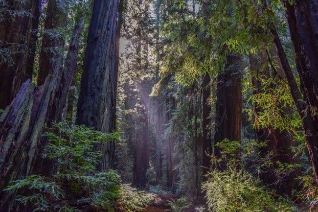 Best Hiking Trails Near Burlingame