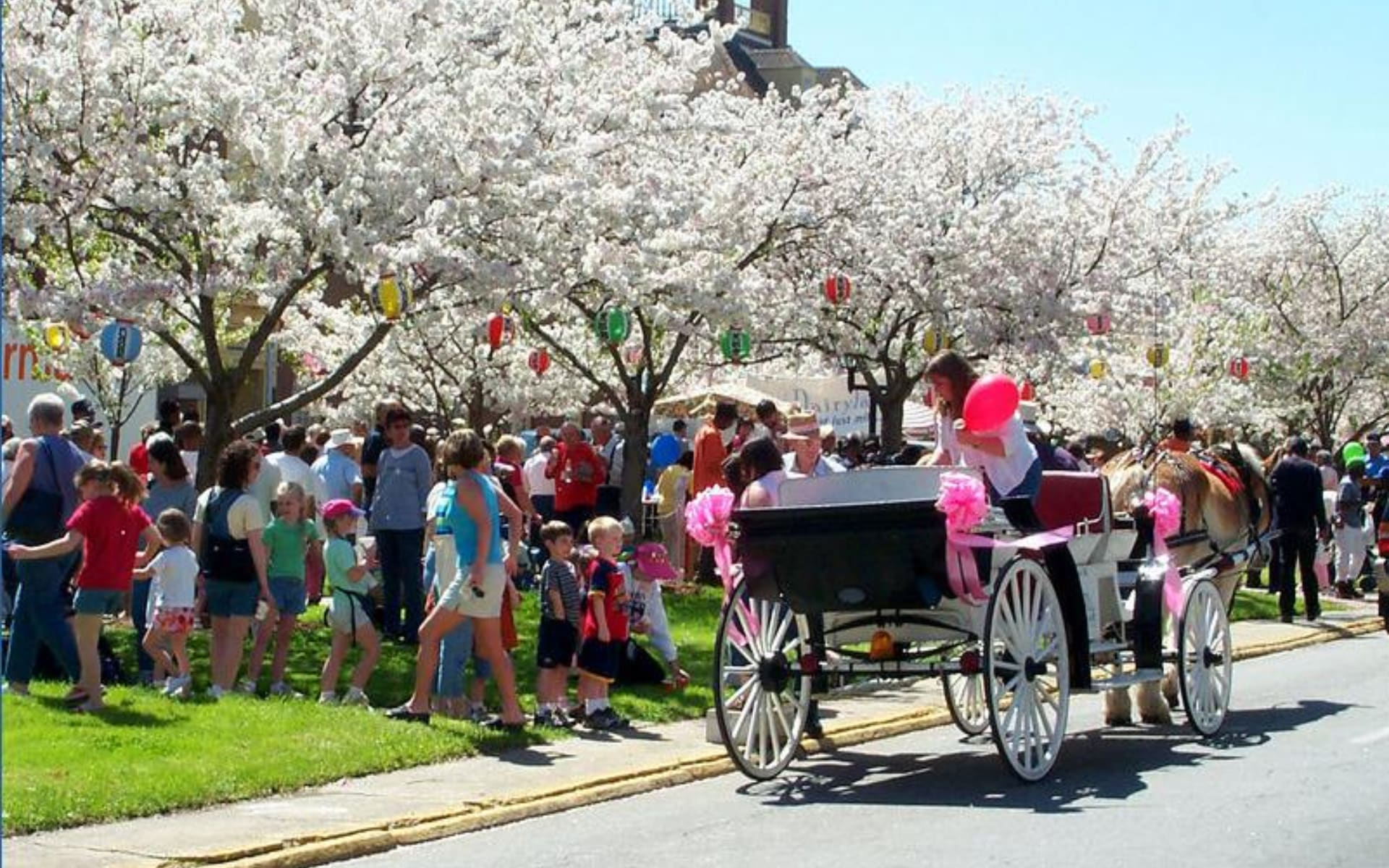 9 Best Ways to See Spring Blooms in Atlanta