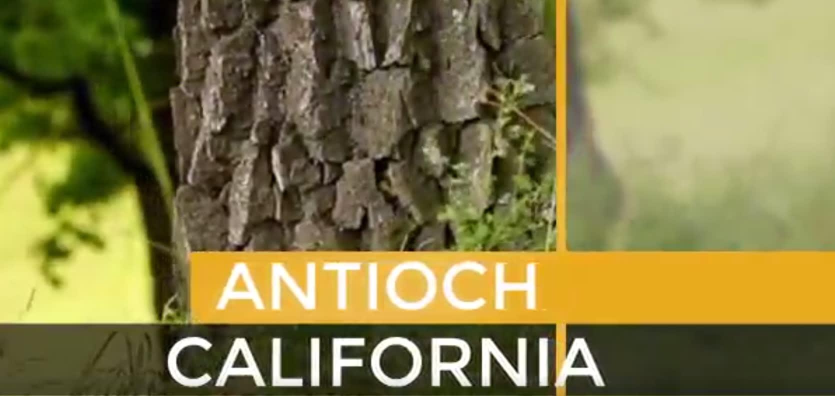 Antioch video preview