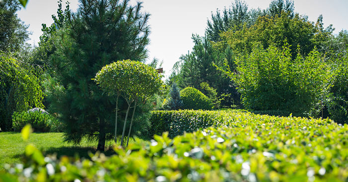 The Biggest Landscaping Trends of 2020