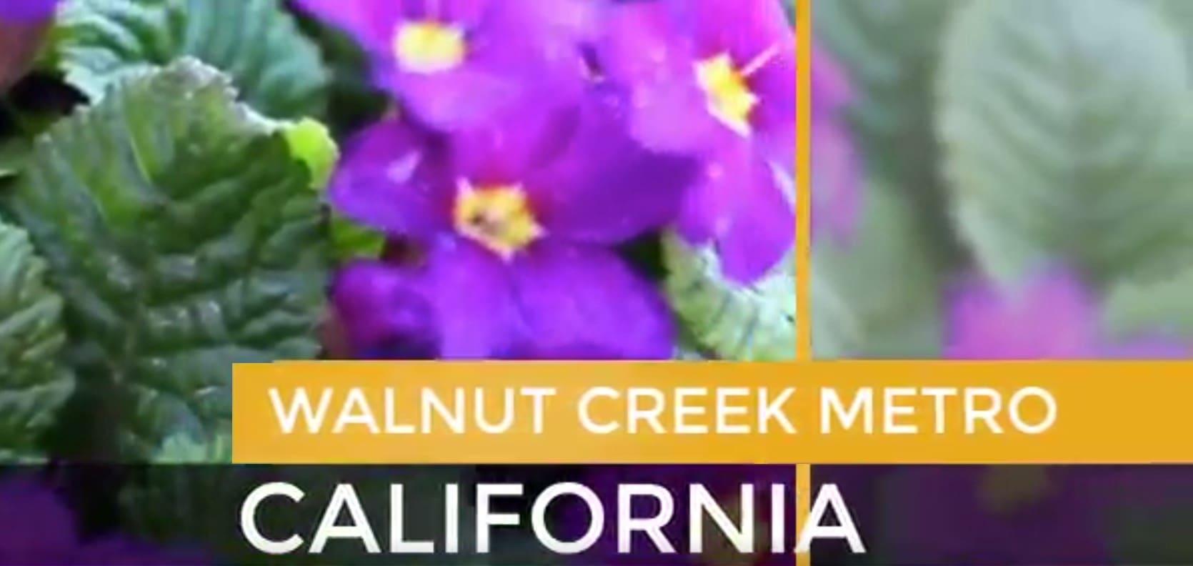 Walnut Creek Metro video preview
