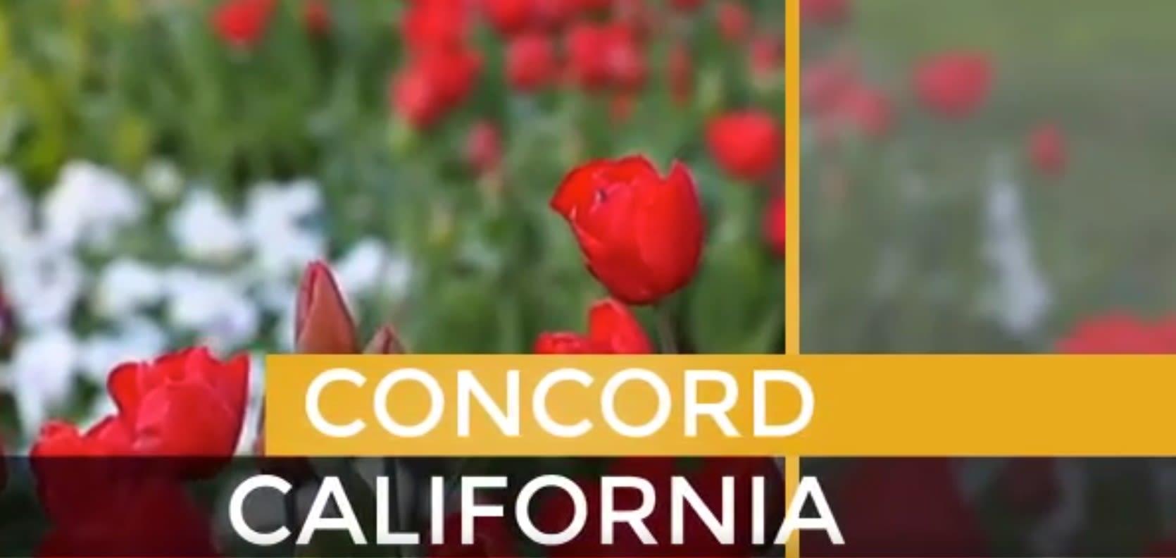 Concord video preview