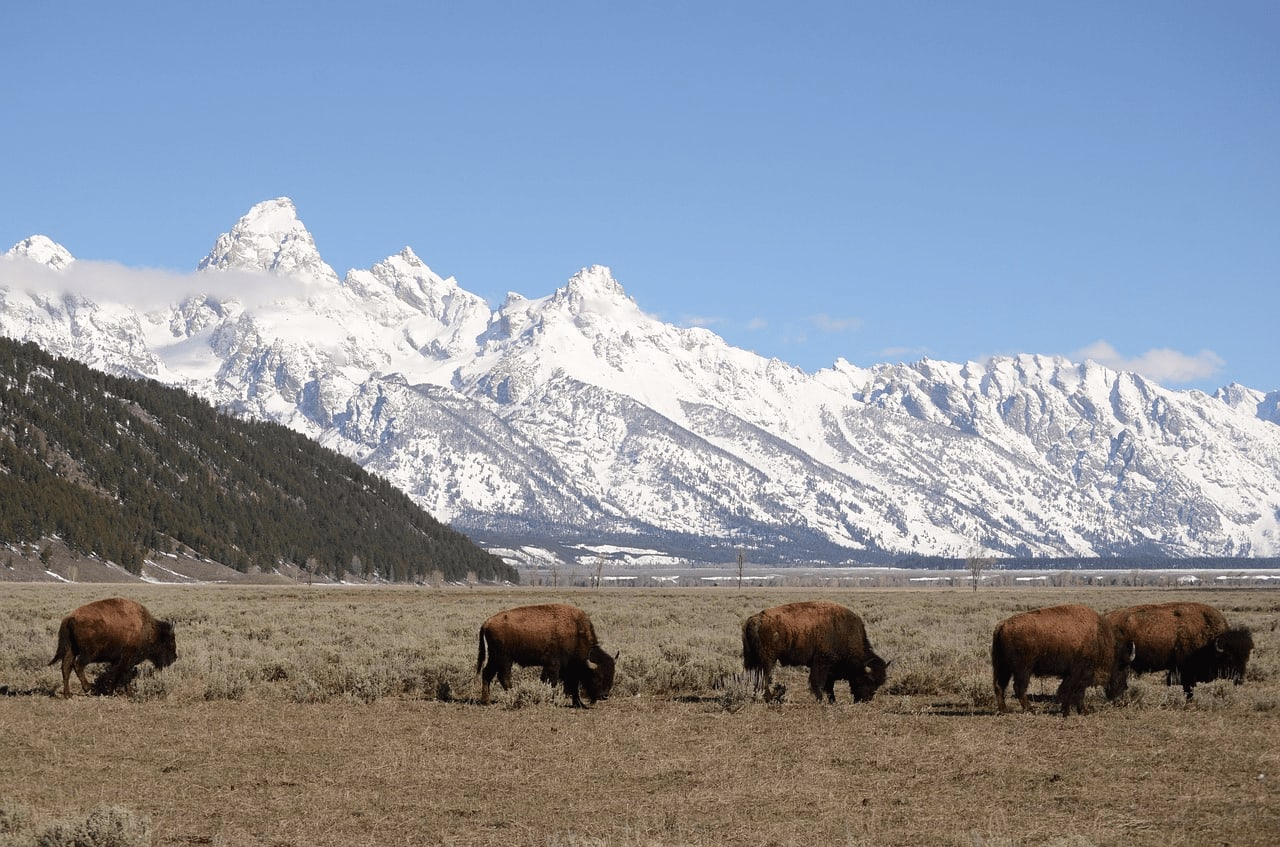 16 Historical Facts About Jackson Hole