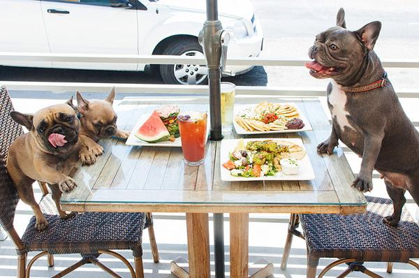 Dog-Friendly Restaurants in San Mateo and Burlingame