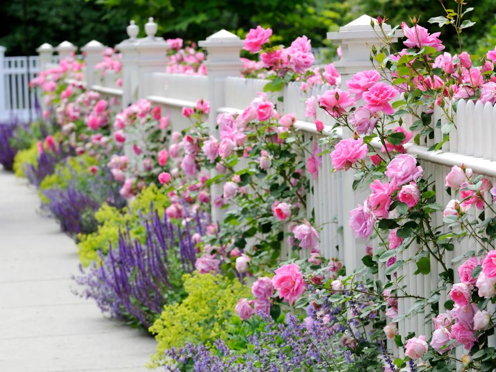 Beautiful Plants to Screen Your Yard for Privacy