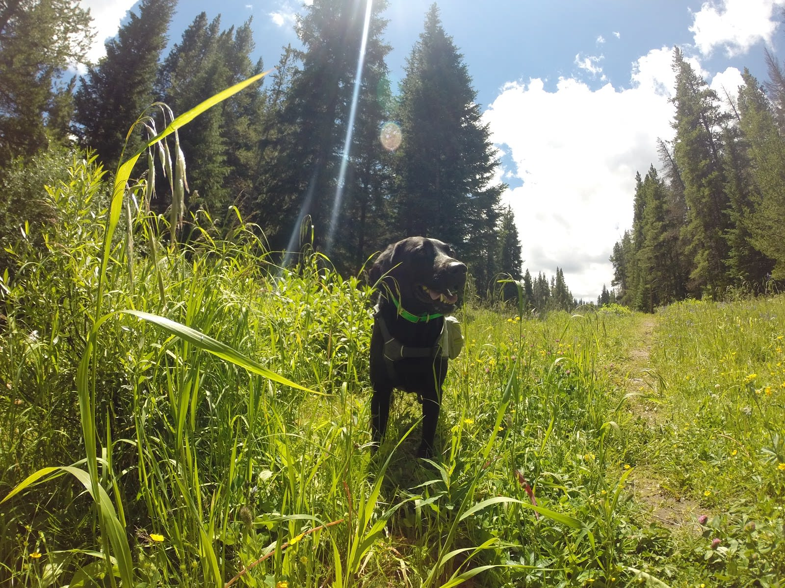 Top Front Range Off-Leash Dog Hikes in and Near Boulder