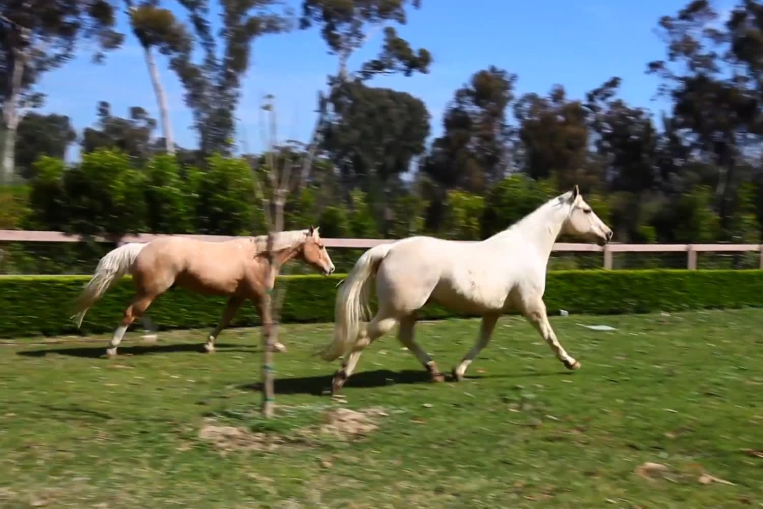 Rancho Santa Fe lifestyle like no other! video preview