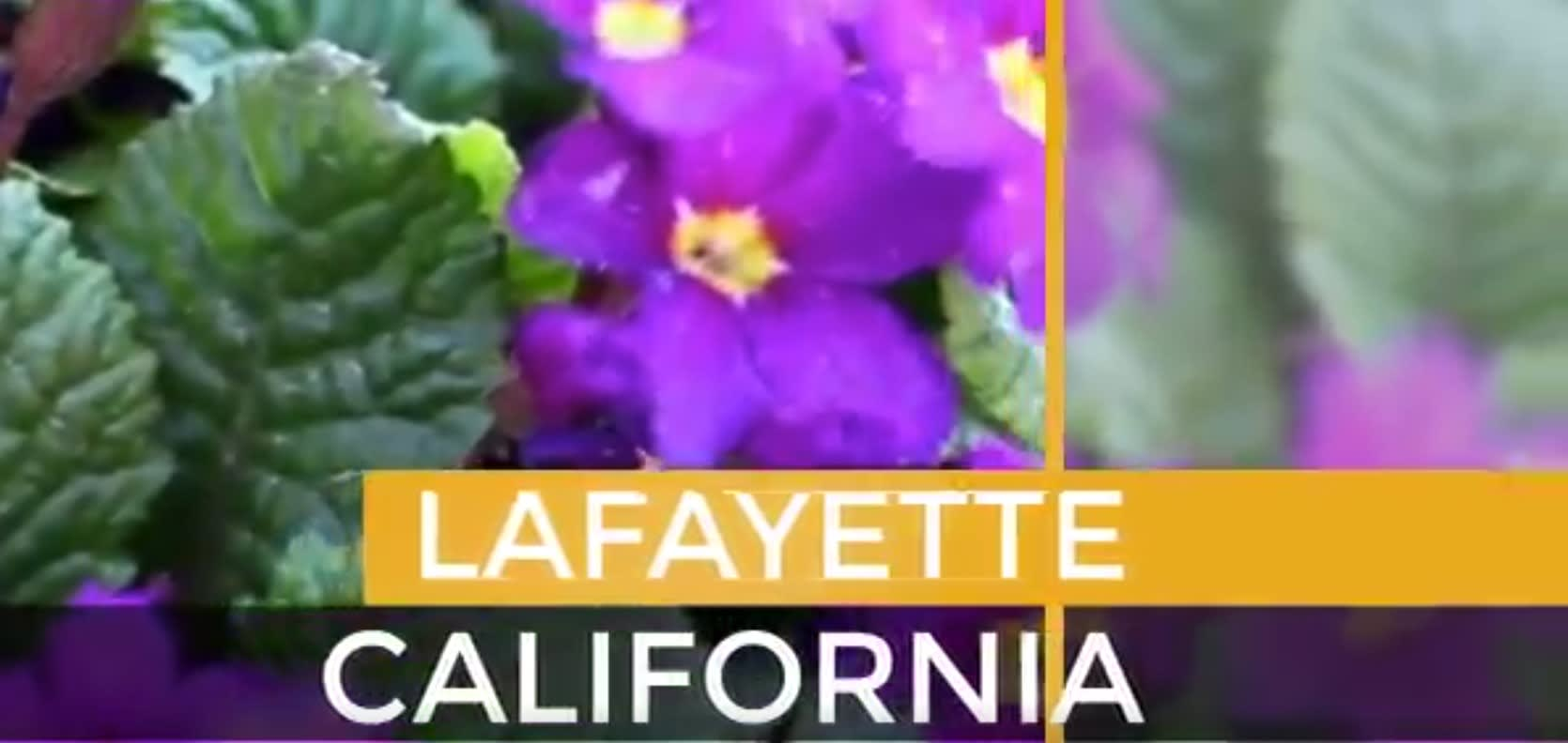Lafayette video preview