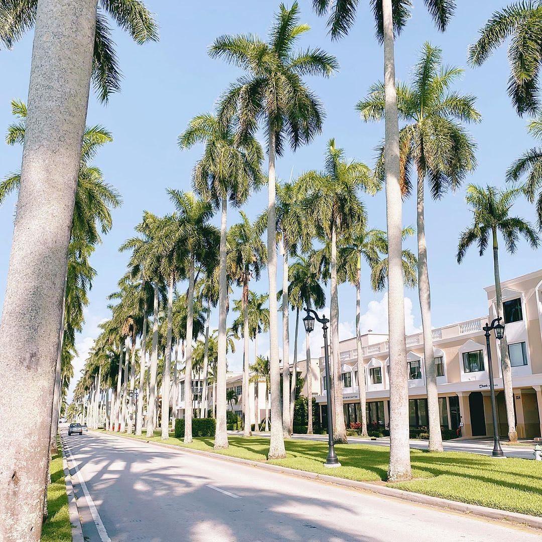 Palm Beach Hibiscus