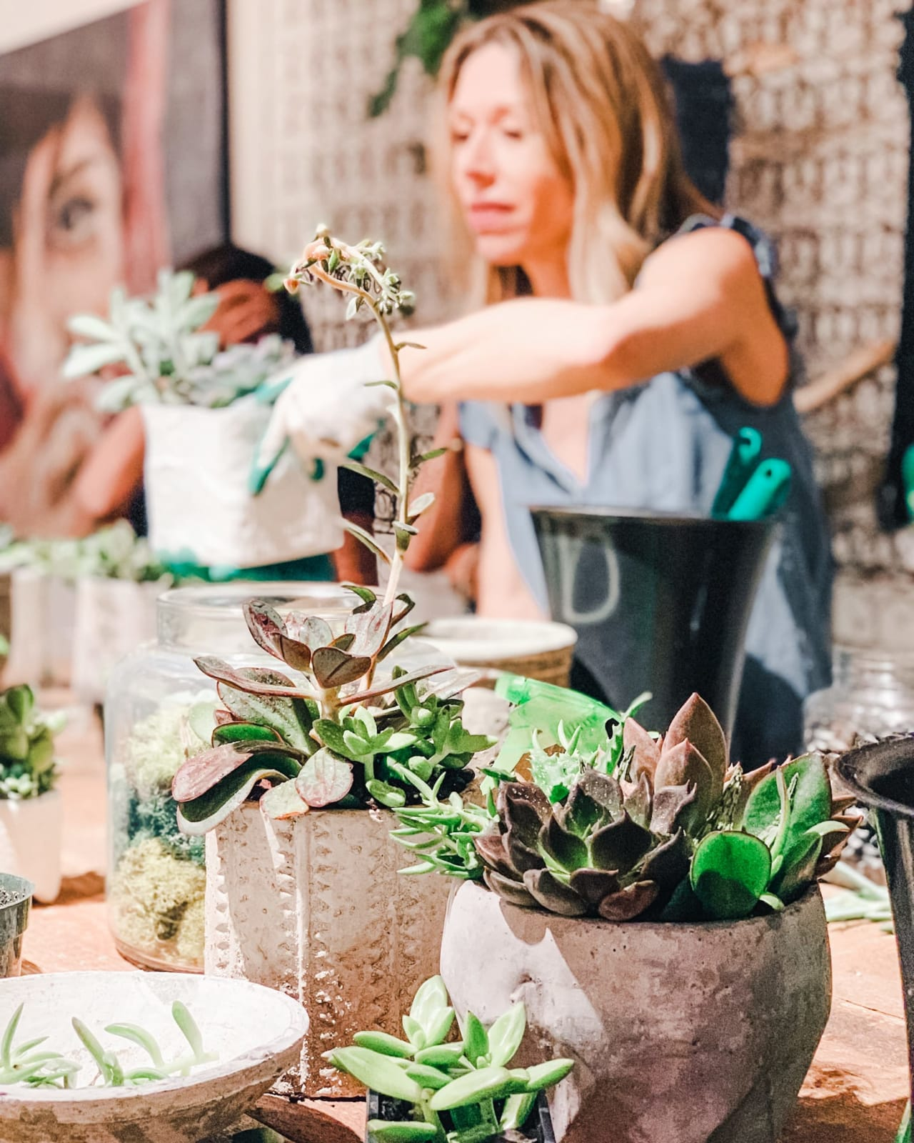 Anne's Easy Guide to Taking Care of Your Houseplants