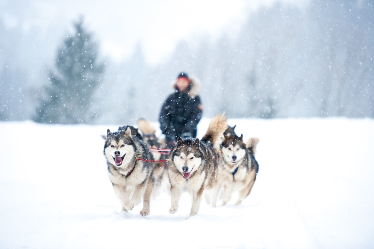 A Winter Wilderness Adventure