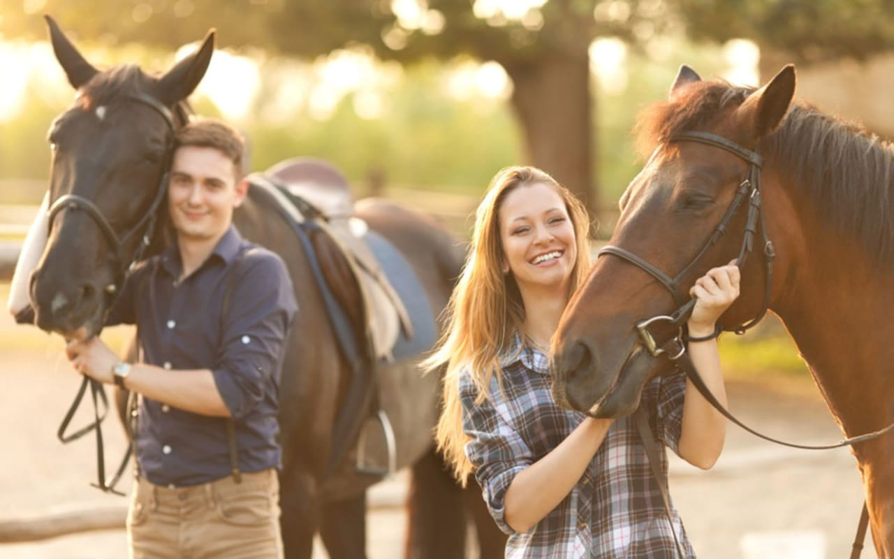 Horse Rescues & Myths About Adoption
