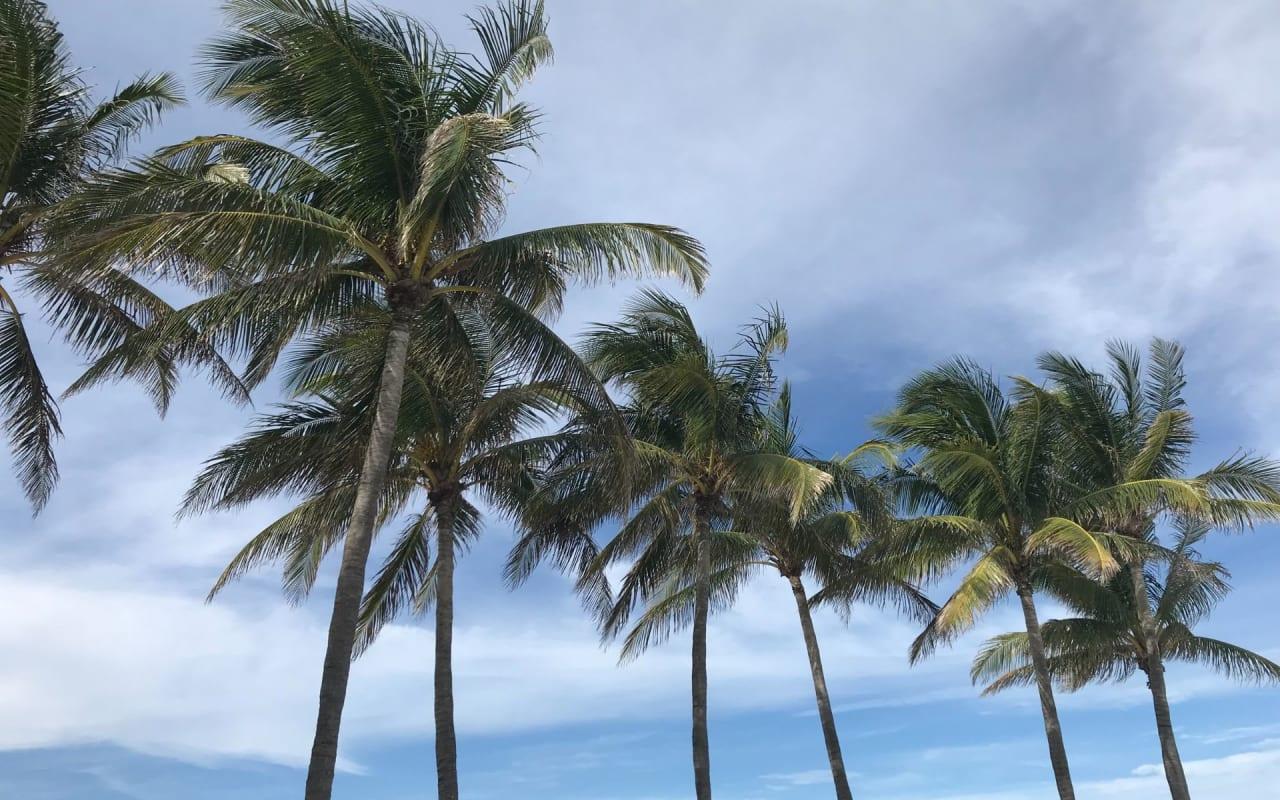 Live Where the Average Home Price Is $3.9 Million in Miami Beach!