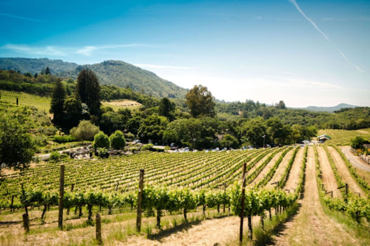 Can't-Miss Sonoma Valley Wineries