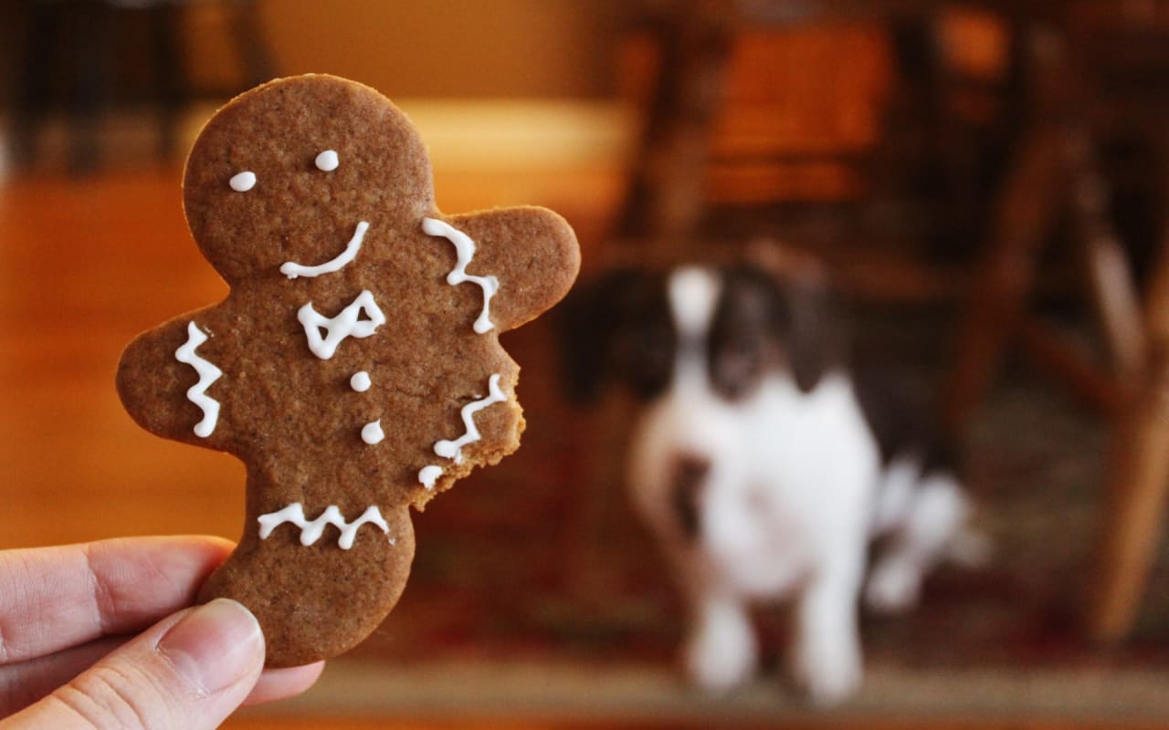 15 Healthy + Homemade Dog Treats for Your Pup