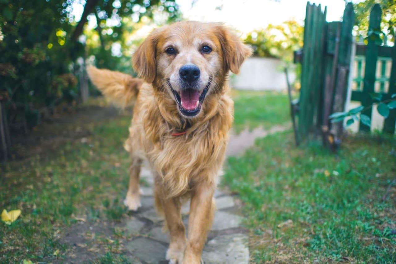 10 Pet-Friendly Places