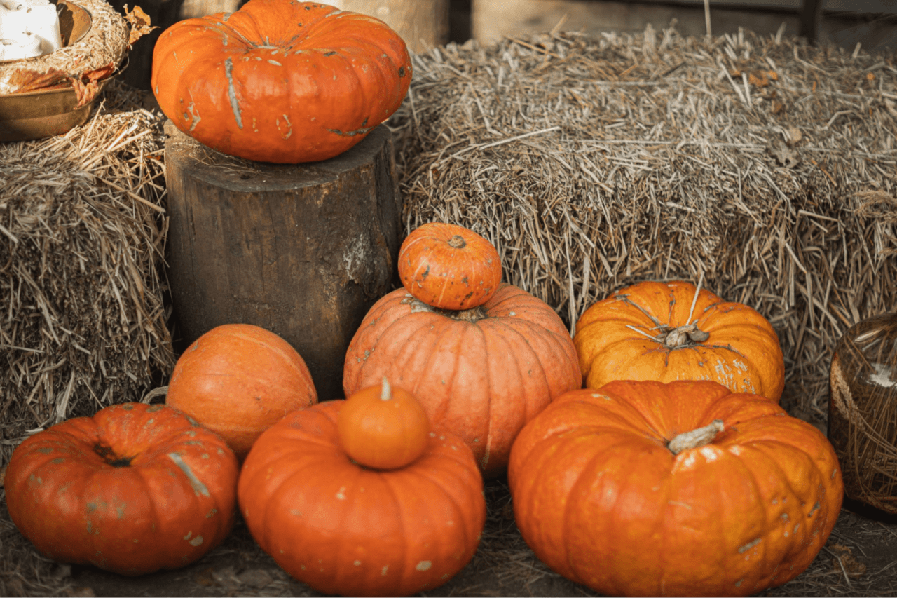 6 Fall Activities in the Hamptons