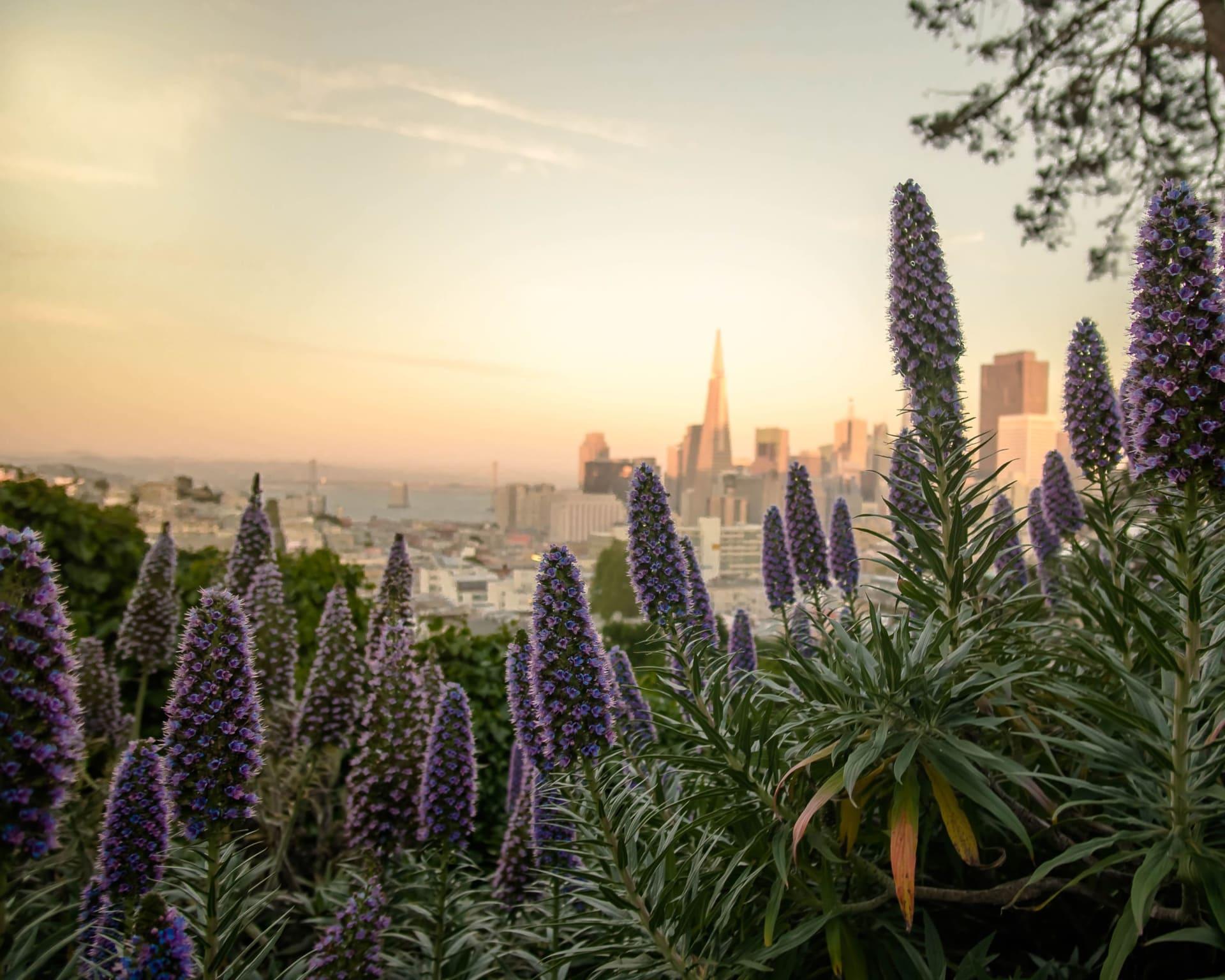 San Francisco Bay Area Real Estate - A Comprehensive Survey, Spring 2021