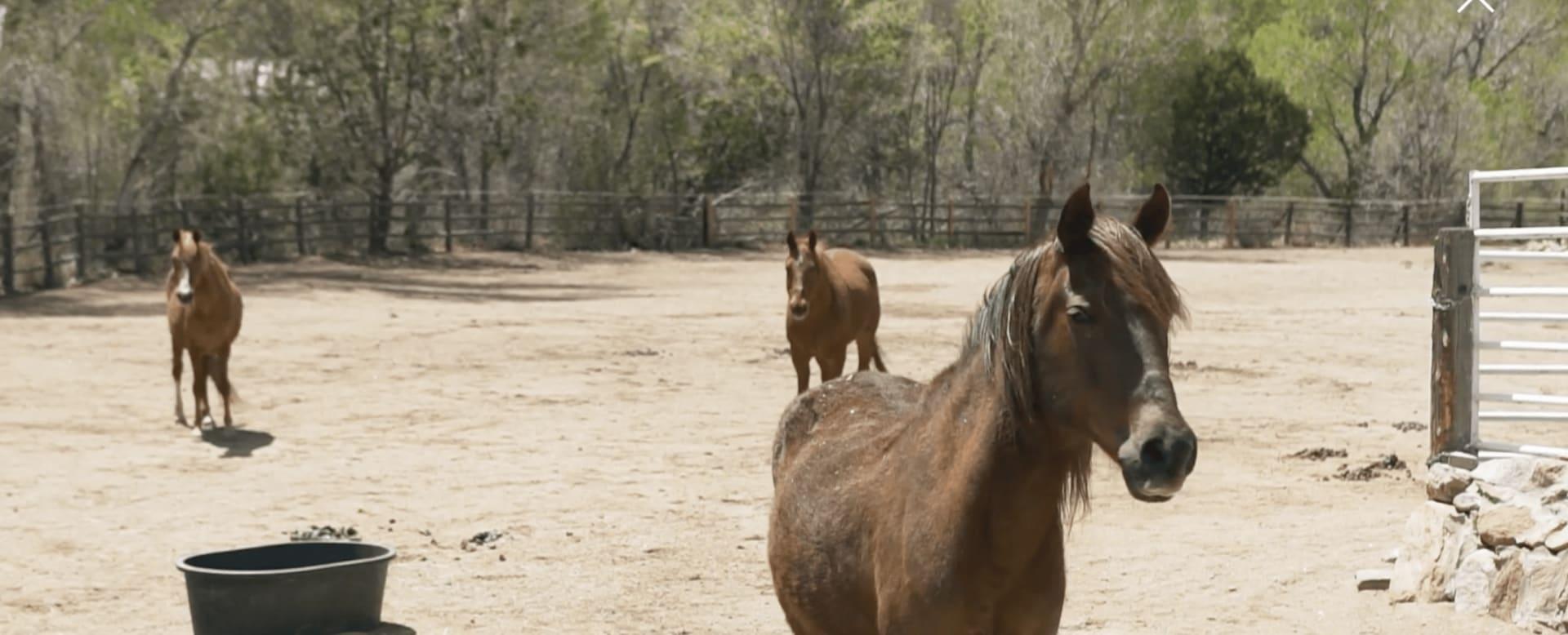Santa Fe Horse Property Experts
