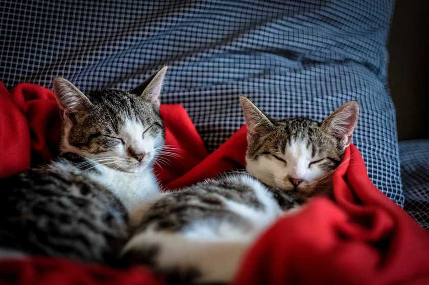 Two cats sleeping