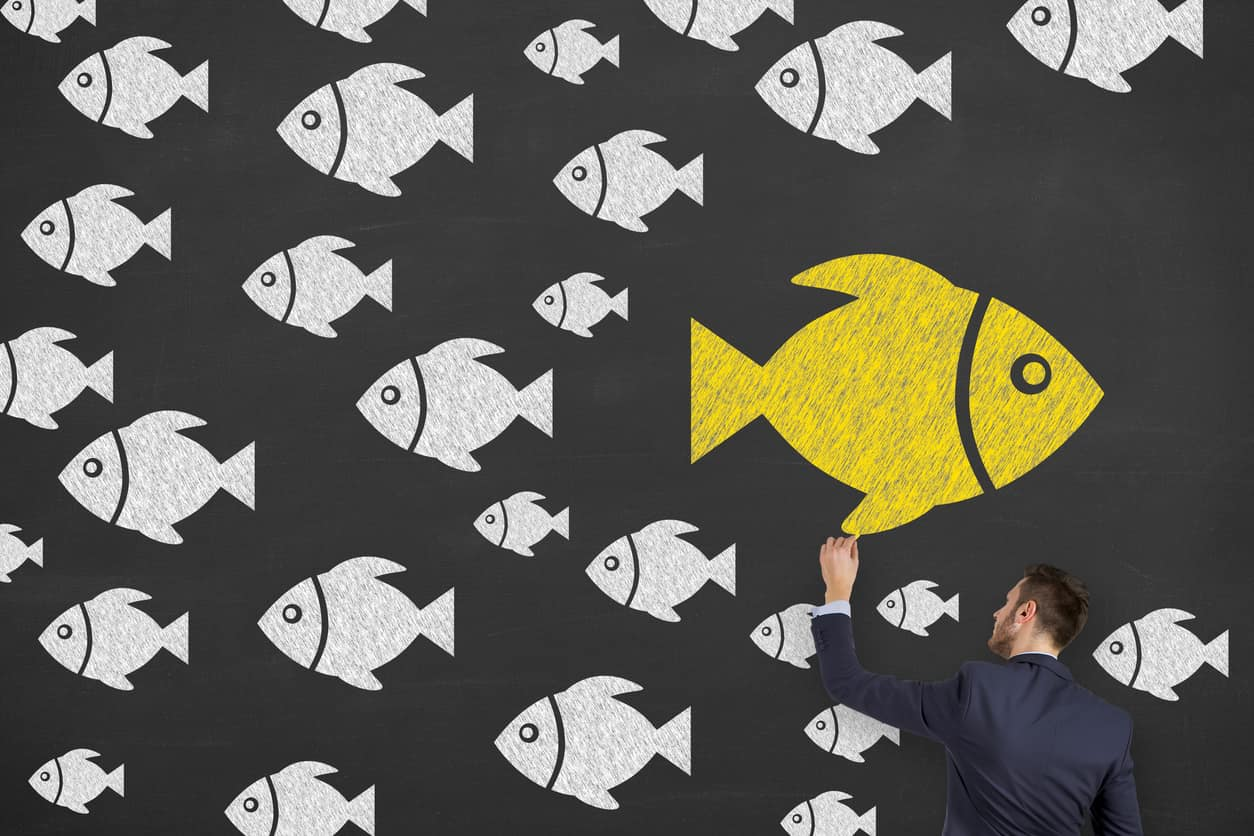 produce a winning proposal - fishing expedition