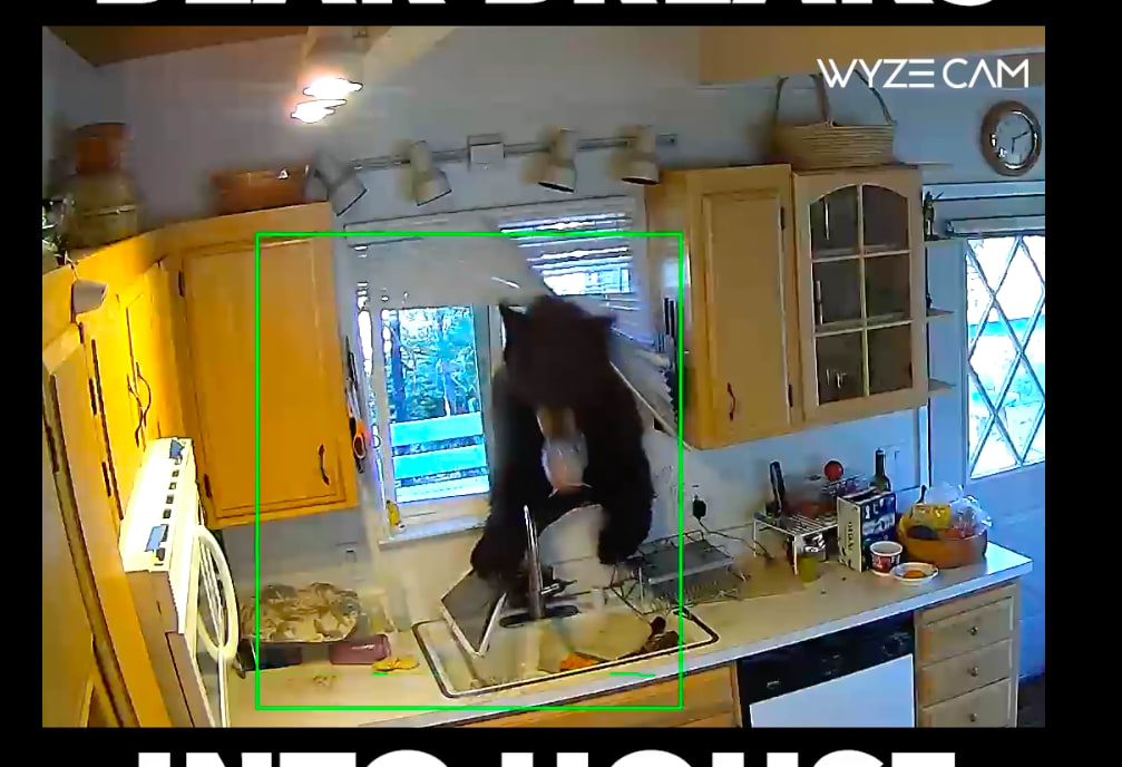 new wyzecam v2 catches bear intruder on camera