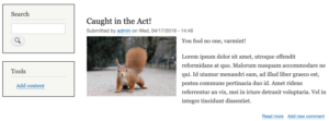 Drupal 8 post with squirrel picture