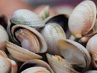 Clams are a high iron food.