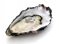 Oysters are a lower calorie filler food.