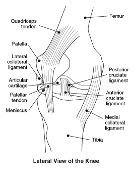 The facts about knee injuries and disorders bones and cartilage ccuart Images