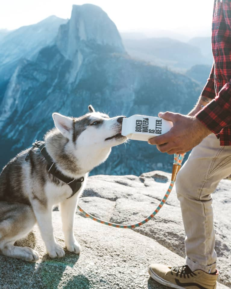 Hombre dando de beber agua a un lobo en la naturaleza