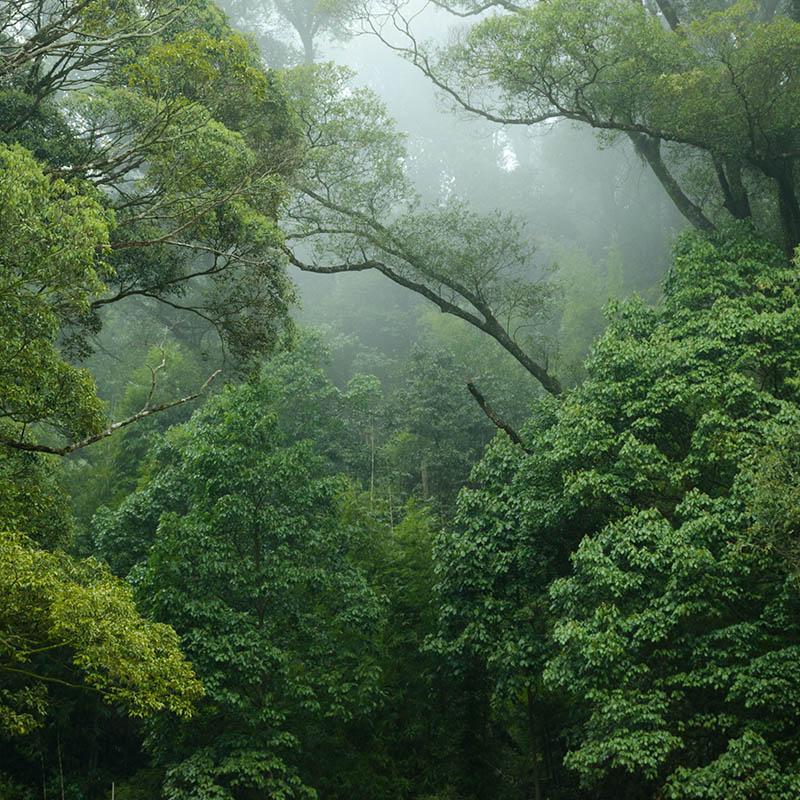 silent valley anaikatti
